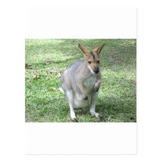 Australische Wallaby Briefkaart