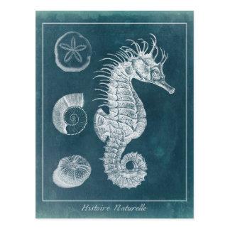 Azuurblauwe Seahorse Studie I Briefkaart