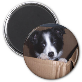 Baby Border collie Magneet