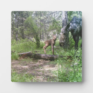 Baby en moederAmerikaanse elanden Fotoplaat