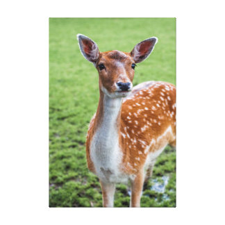 "Bambi (24.00"" x 16.00""), 1.5"", de Enige Druk van Stretched Canvas Prints"