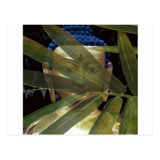 Bamboe Boedha Briefkaart