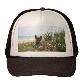Beachgrass van het Pet van de Duitse herder