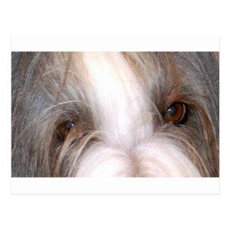 Bearded_collie eyes.png briefkaart