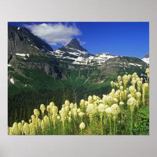 Beargrass bij Logan Pas in het Nationale Park van  Afdruk