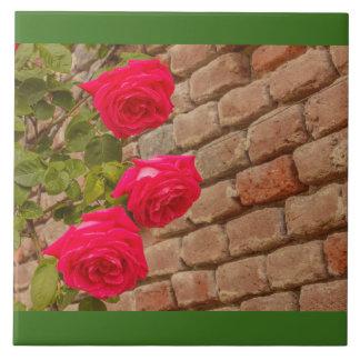 beklimmen de rozen op een bakstenen muur keramisch tegeltje