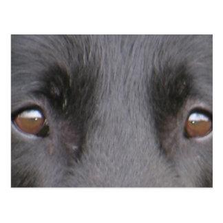 Belgian_Groenendael eyes.png Briefkaart