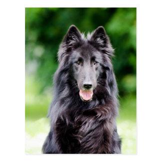 Belgische Groenendael hond, de Belgische foto van Briefkaart