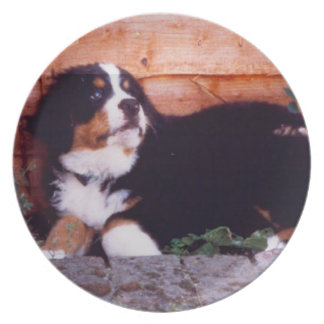 bernese het puppybord van de berghond melamine+bord