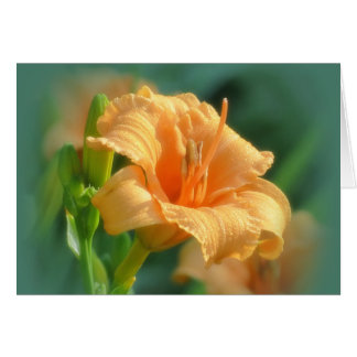 Bertie Blooms - Daylily Kaart