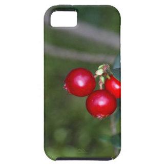 Bessen van wilde lingonberry (Vaccinium Tough iPhone 5 Hoesje