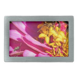 bij en insect die zich op een paarse bloem gespen