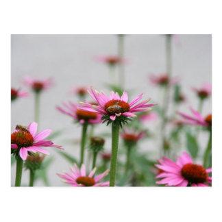 Bijen en Echinacea Briefkaart