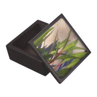 Bladeren en Schaduwen Premium Cadeau Doosje