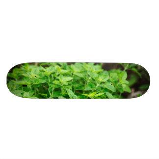 Bladeren Skateeboard Persoonlijk Skateboard
