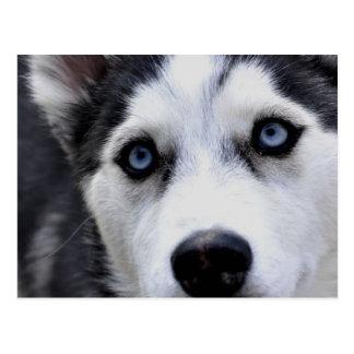 Blauw Eyed Schor Briefkaart