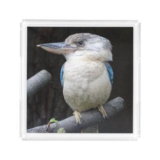 Blauw-gevleugelde kookaburra acryl dienblad