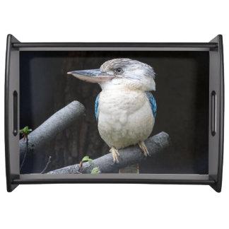 Blauw-gevleugelde kookaburra dienblad