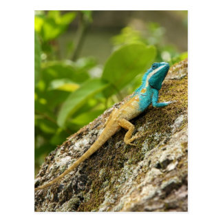 Blauw-kuif Hagedis Calotes Mystaceus Briefkaart