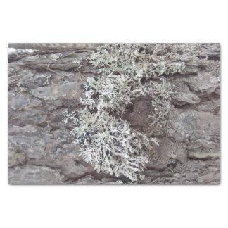 blauw mos tissuepapier