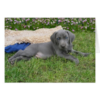 Blauw Puppy Weimaraner Kaart