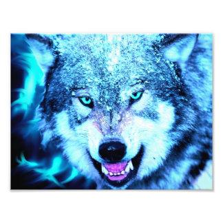 Blauw wolfsgezicht foto afdruk