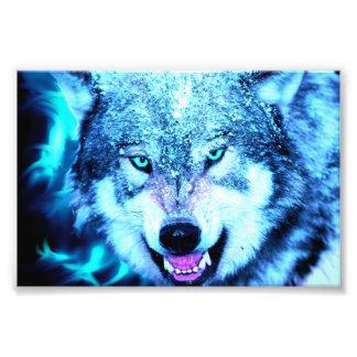 Blauw wolfsgezicht foto afdrukken