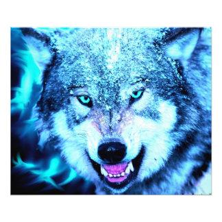 Blauw wolfsgezicht fotoafdrukken