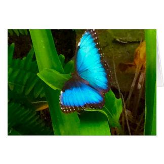 Blauwe Dichte Omhooggaand van de vlinder Briefkaarten 0