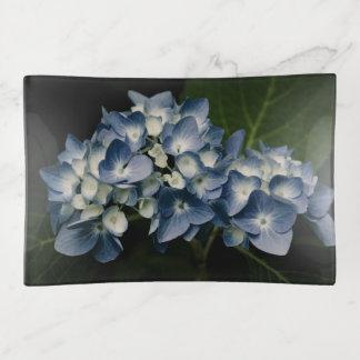 Blauwe Hydrangea hortensia 8514 Sierschaaltjes