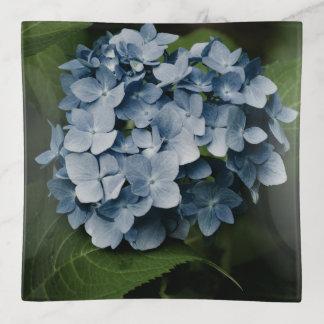 Blauwe Hydrangea hortensia 8515 Sierschaaltjes