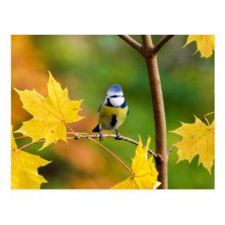 Blauwe Mees in de esdoornboom van Noorwegen Briefkaart