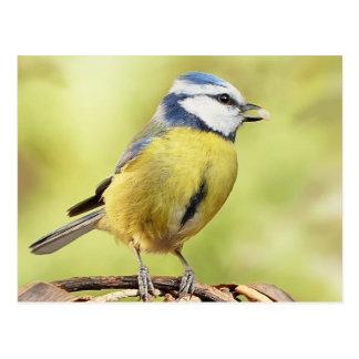 Blauwe meesvogel briefkaart