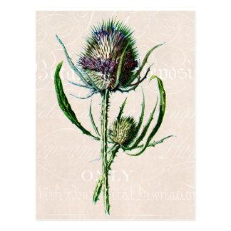Bloem van de Distel van vintage 1902 de Schotse Briefkaart