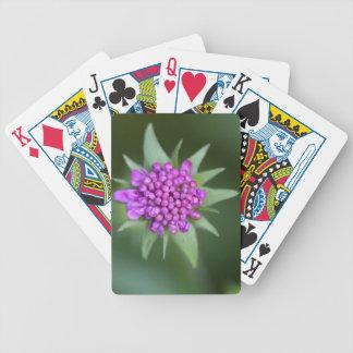 Bloem van een lucida Scabiosa Poker Kaarten