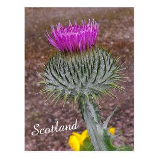 Bloem van Schotland, de Distel Briefkaart