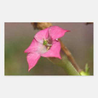 Bloem van tabak (tabacum van de Nicotiana) Rechthoek Sticker