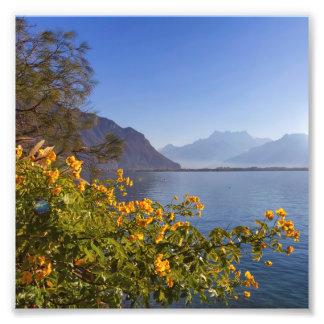 Bloemen bij het meer van Genève, Montreux, Foto