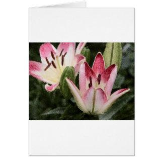 Bloemen en Knoppen van de Lelie van de lolly de de Briefkaarten 0