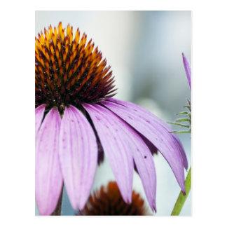 Bloemen Harmonie Briefkaart