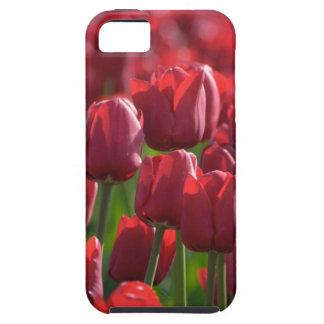 Bloemen Rood de telefoonhoesje van Tulpen Tough iPhone 5 Hoesje