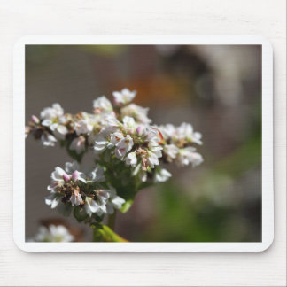 Bloemen van een plant van het Boekweit (esculentum Muismat