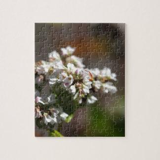 Bloemen van een plant van het Boekweit (esculentum Puzzel