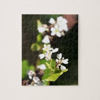 Bloemen van een plant van het Boekweit (esculentum Puzzels