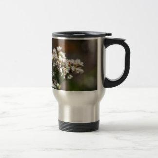 Bloemen van een plant van het Boekweit (esculentum Reisbeker