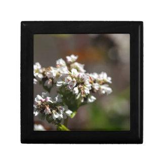 Bloemen van een plant van het Boekweit (esculentum Vierkant Opbergdoosje Small