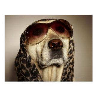 Blonde Labrador die zonglazen dragen Briefkaart