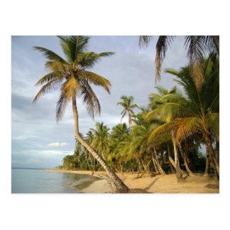 Bochtige Palm Briefkaart