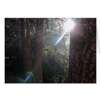 Bomen 2 van het Park van de Canion van Franklin Kaart