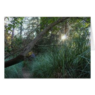Bomen 4 van het Park van de Canion van Franklin Kaart
